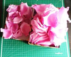 Роза - царица цветов 3 - Страница 16 0_13e33b_abd1be7_M