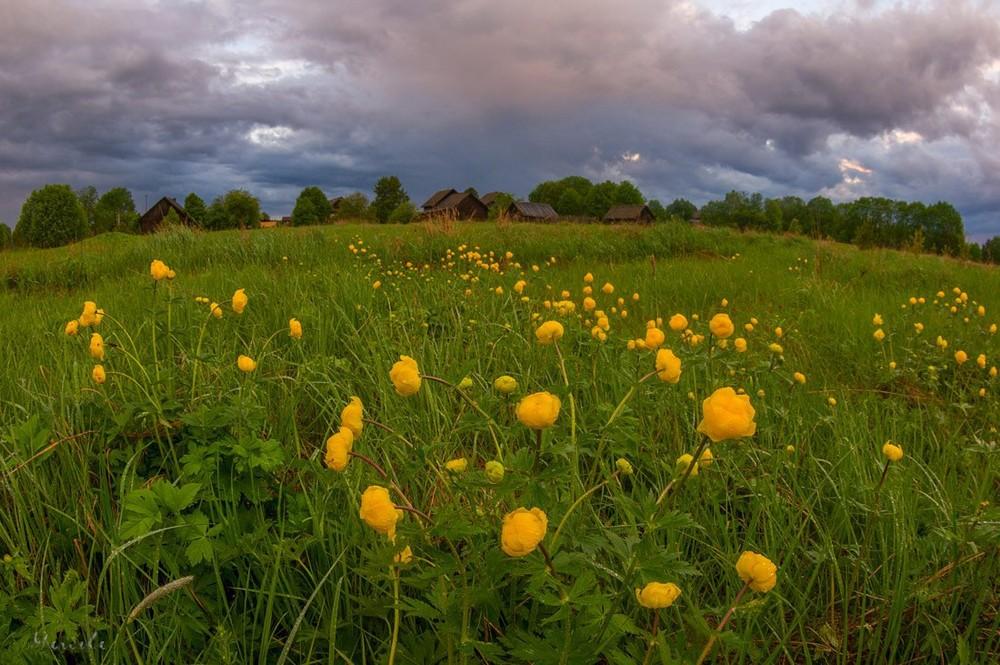 Сельские пейзажи Марины Мурашовой