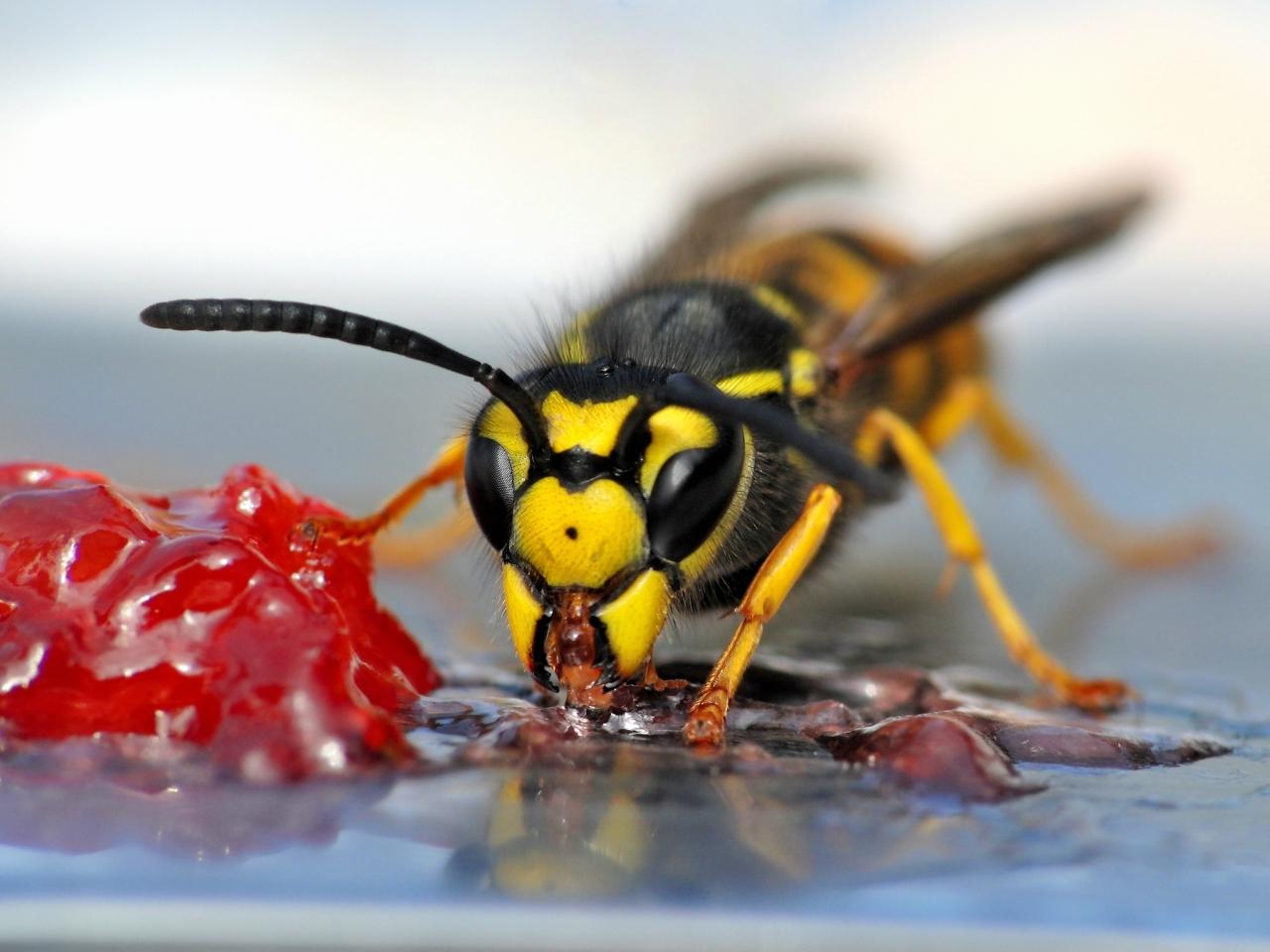 Maroosya WASP