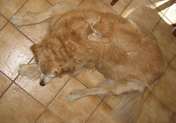 Нашкодил — мимикрируй под собаку.