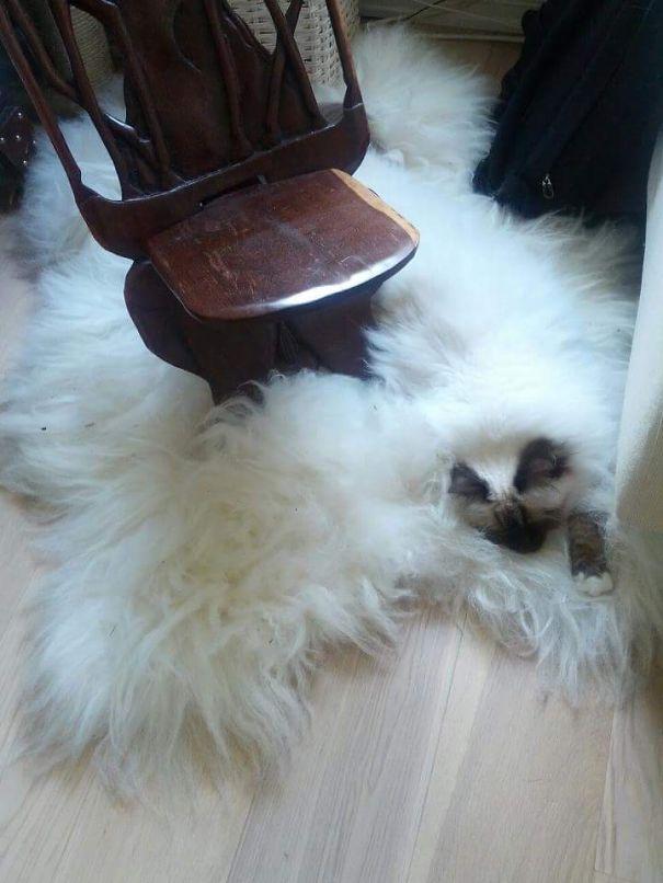 Чеширский кот: видна одна лишь морда.