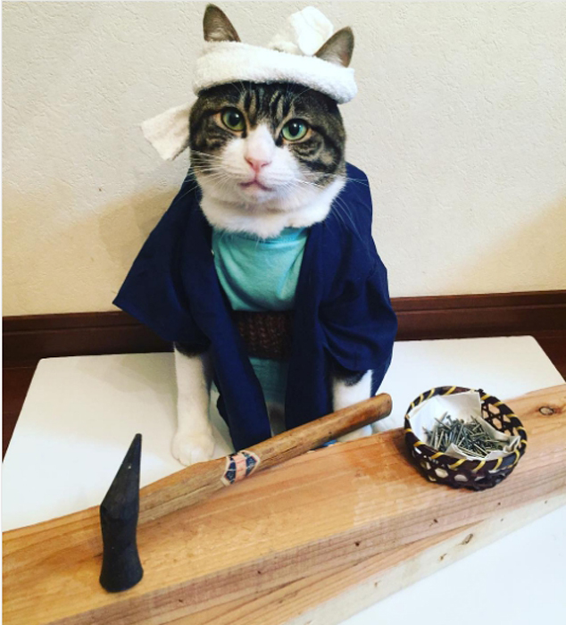 Фото самого терпеливого кота в мире (16 фото)
