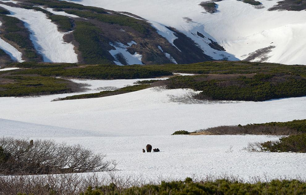 4. Озеро Камбальное медленно, но верно освобождается ото льда.