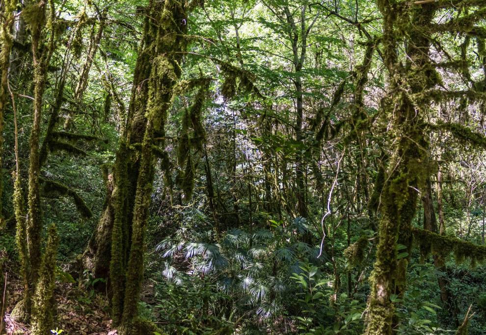 4. За прочность самшит ещё называют железным деревом.