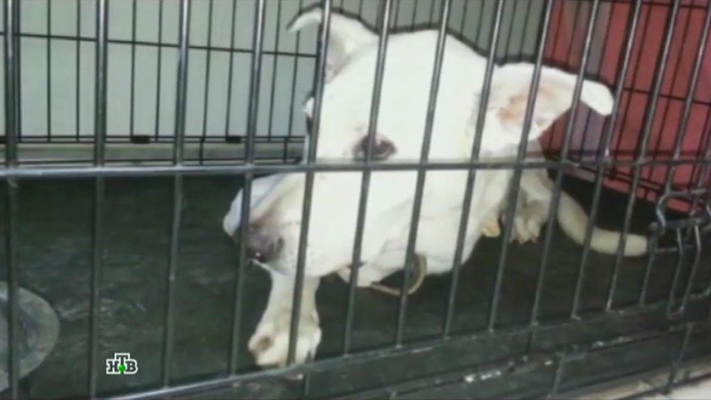 В столице впожаре вприюте для животных погибли неменее 10 собак