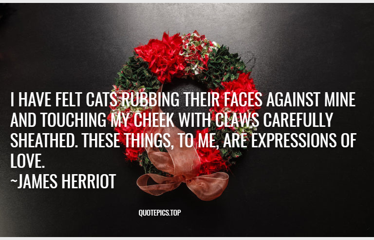 I have felt cats rubbing their faces against mine and touching my cheek with claws carefully sheathed. These things, to me, are expressions of love. ~James Herriot