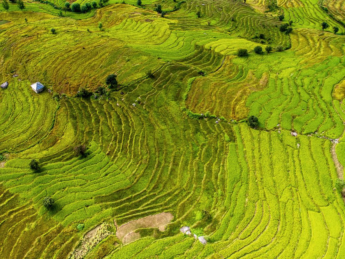 Почему человек различает больше оттенков зелёного чем других цветов