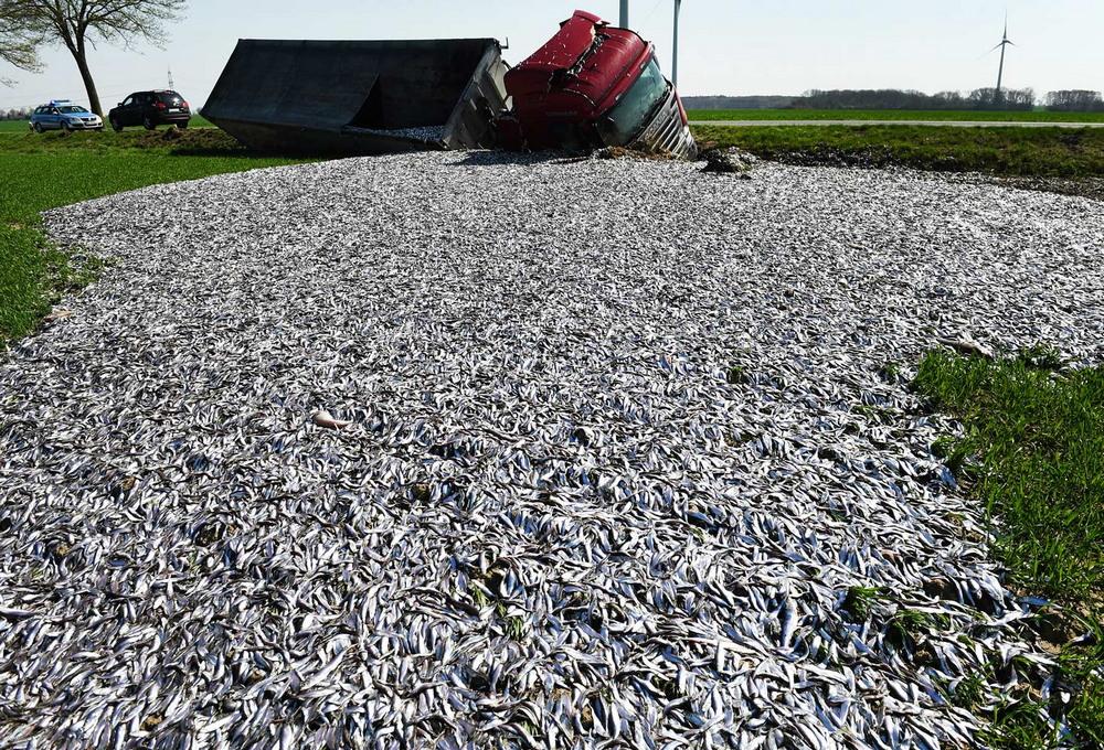 Грузовик с 20 тоннами рыбы перевернулся в Германии