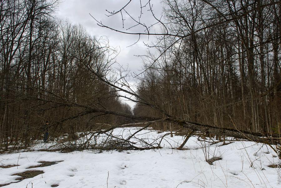 упавшее на дорогу дерево