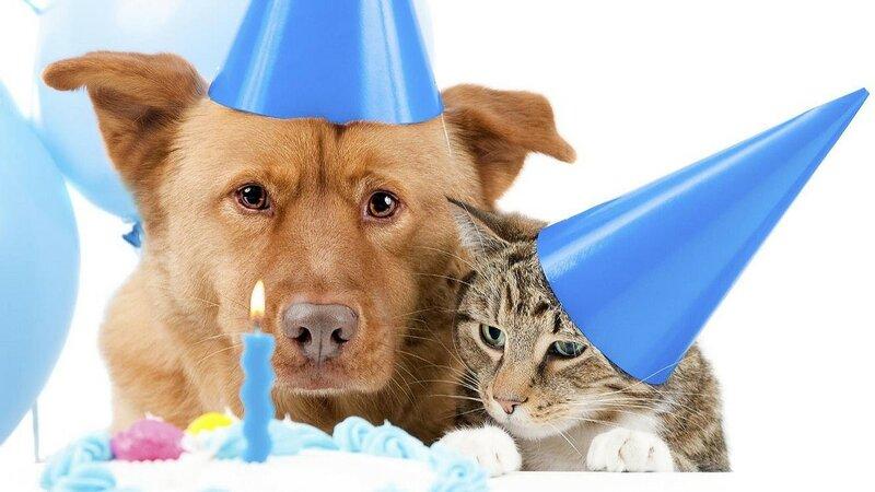 Поздравление кота и собаки с днем рождения