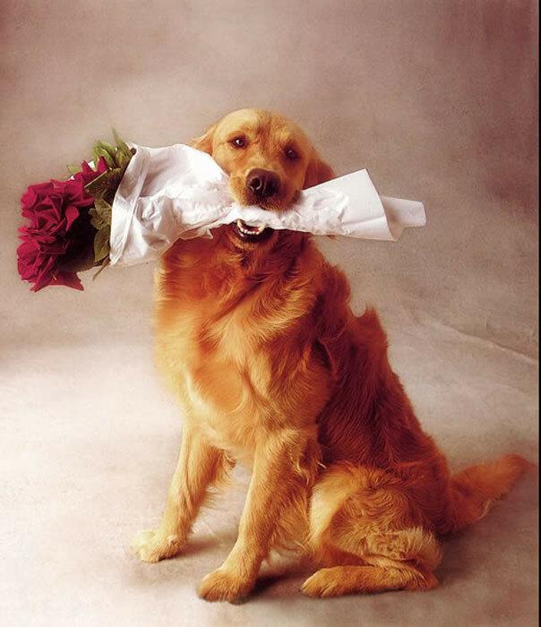 Поздравительная открытка с днем рождения с собакой
