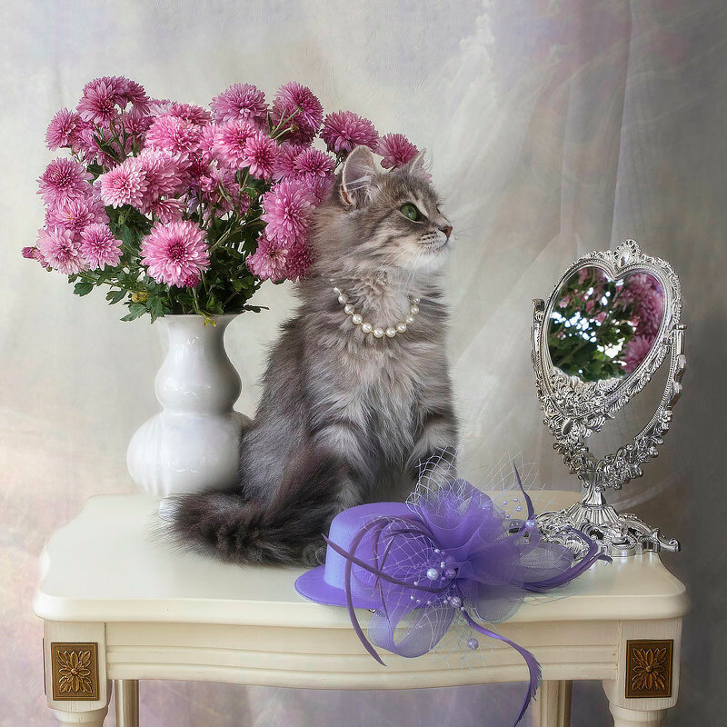 открытки с днем рождения с розами котятами вас все