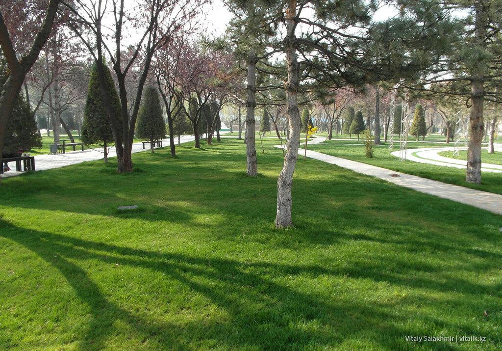 Газон в Ташкенте, Узбекистан