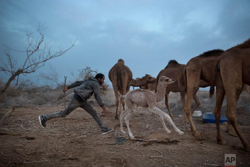 Интересные фото с Ближнего Востока