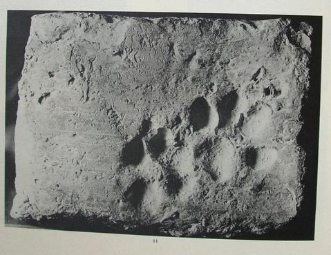 кошки оставили свой след в истории фото
