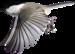 VC_Tulips_EL114.PNG