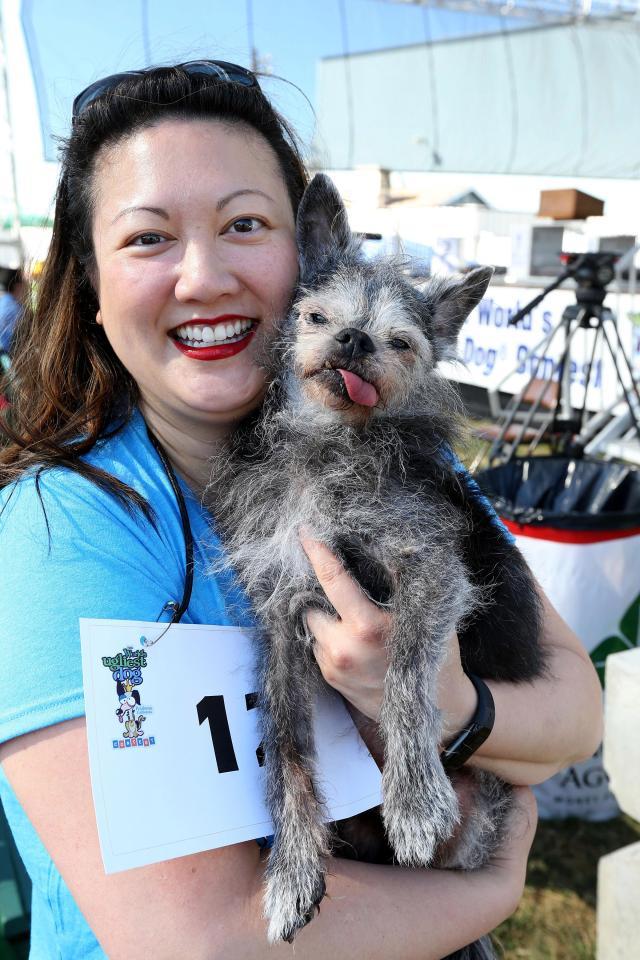 Самую уродливую собаку в мире выбрали в Калифорнии