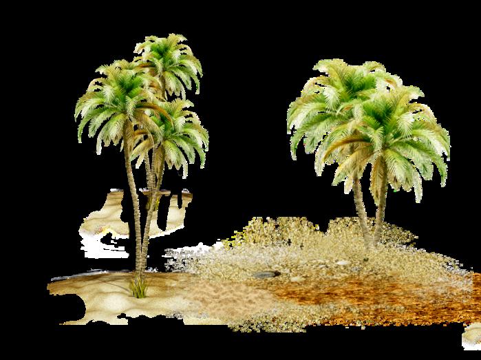 Пальмы разные (59).png