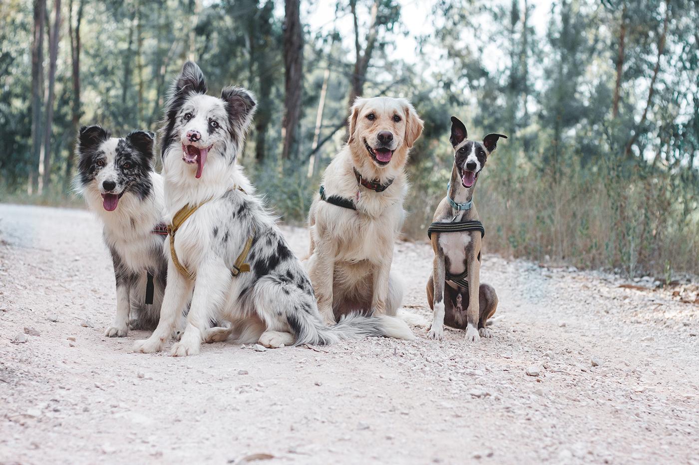 Собачий Д'Артаньян и три мушкетера какие-то