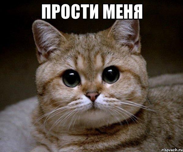 Прости меня! Кот с круглыми глазами