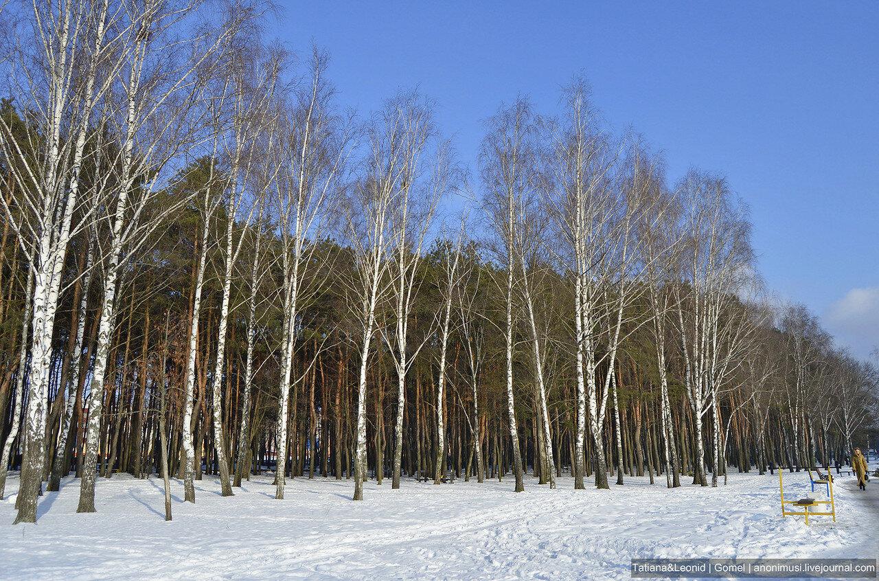 Зима в сквере Фестивальный