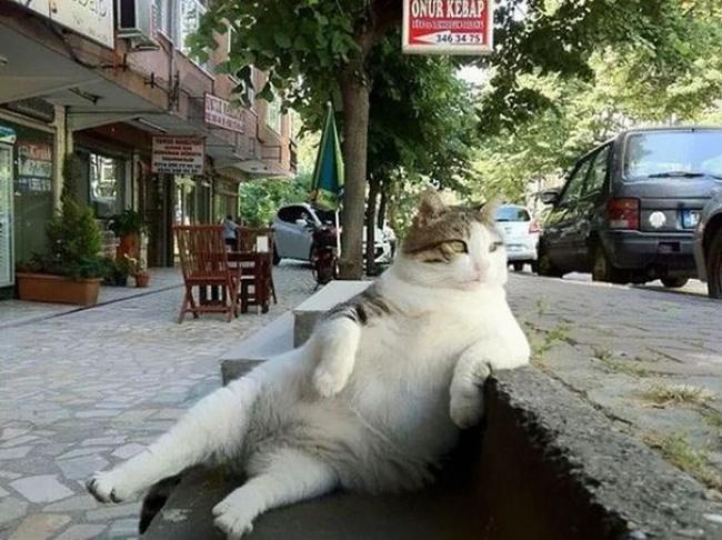 © Tombili / facebook.com  Недавно Томбили нестало, ижители Стамбула, наулицах которого онт