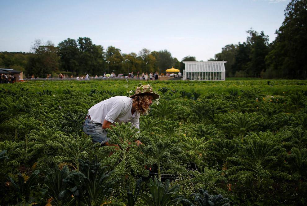 19. Теплицы садового общества Rosendals Garden в Стокгольме, Швеция, 11 сентября 2016. (Фото Ma