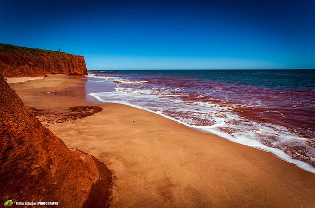 Красный прилив — общее название явления, которое обозначает внезапное массовое размножение бурых во