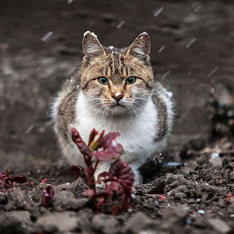 Экспрессивные портреты животных фотографа Сергея Полюшко