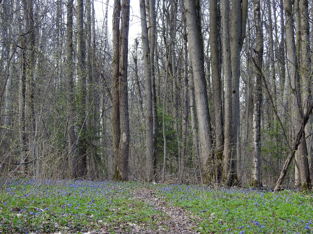 Бутовский лес