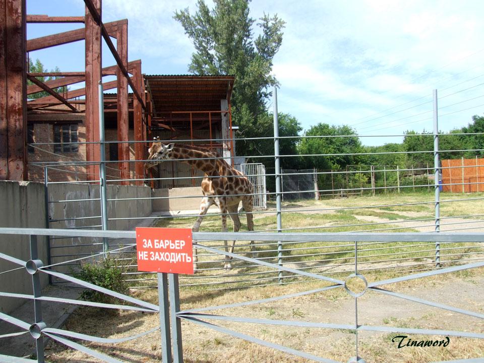 зоопарк-30.jpg