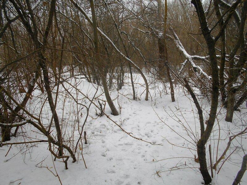Лес зимний ... DSCN0878.JPG