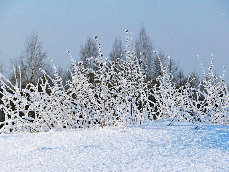 Снег и иней