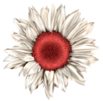 LH_Curious_Flower_010.png