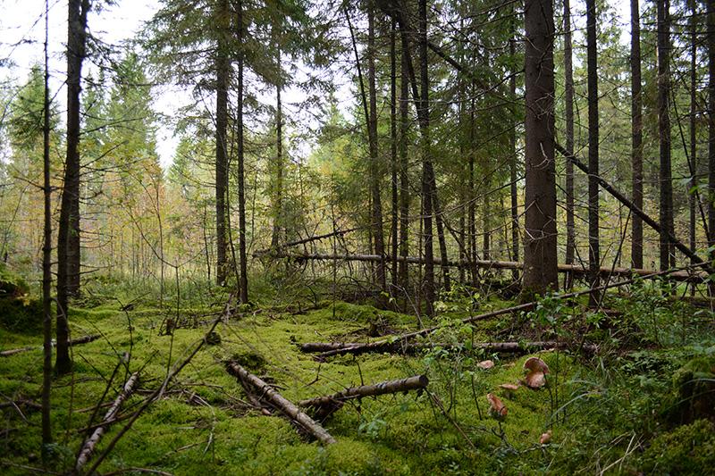 сказочный лес 16 2.jpg