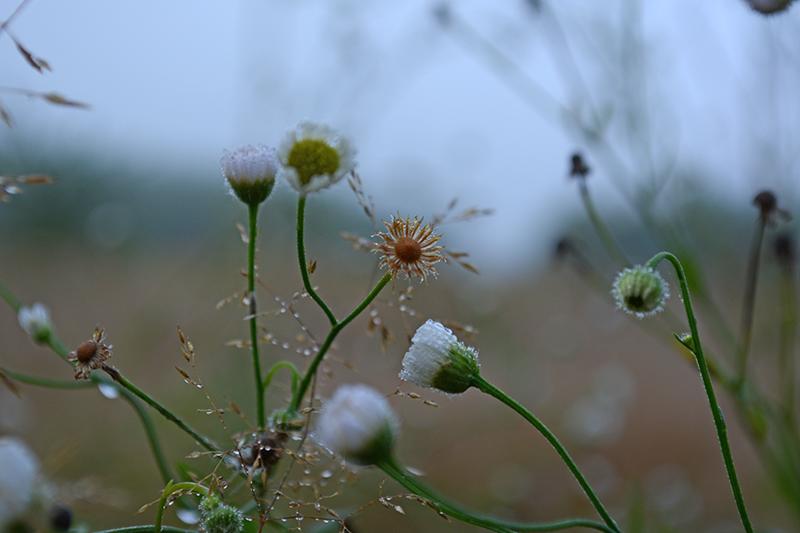 капельки трава 5.jpg