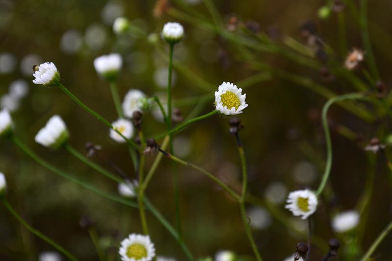 капельки трава 11.jpg