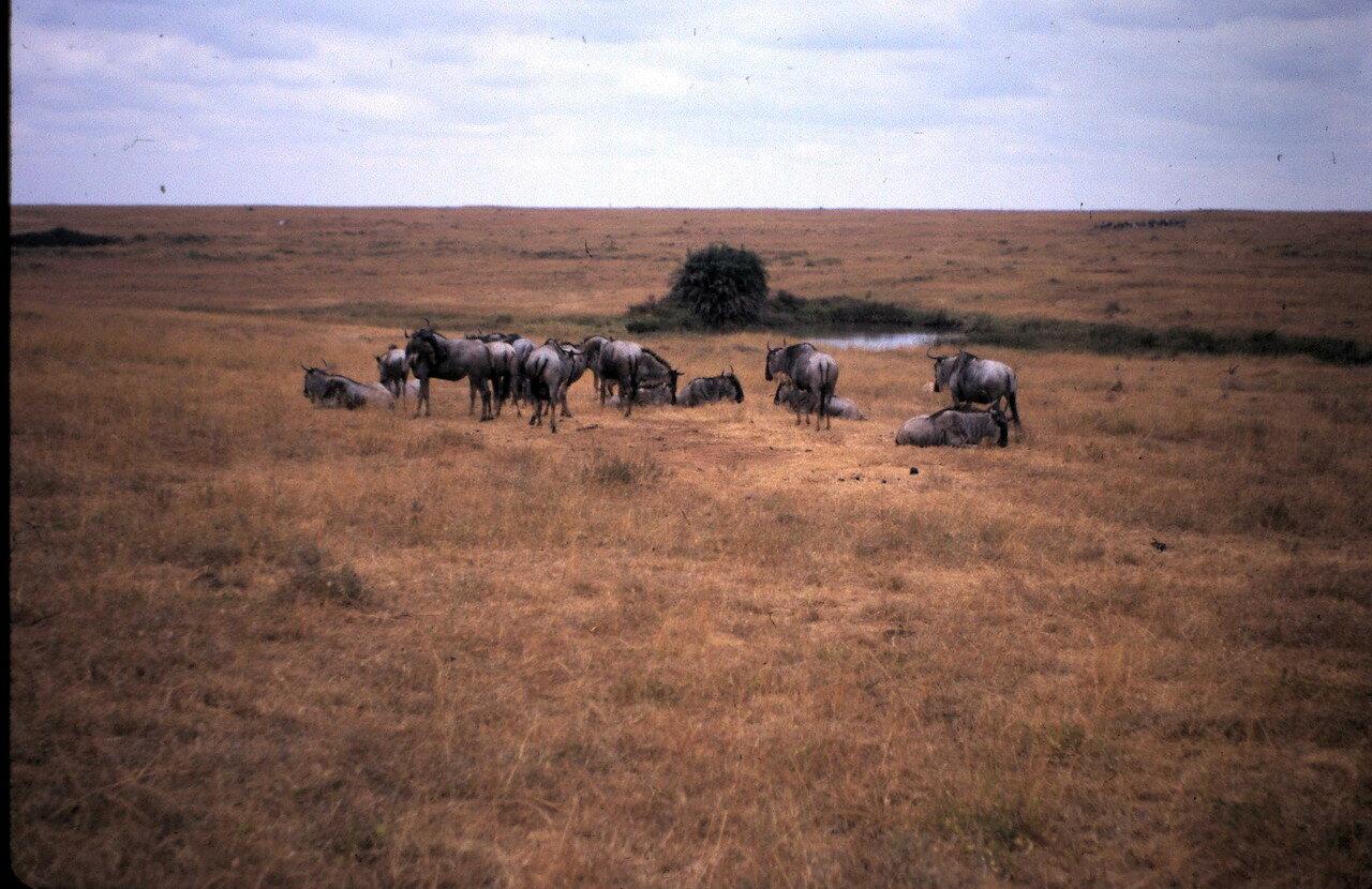10 августа. В окрестностях Найроби (Кения)