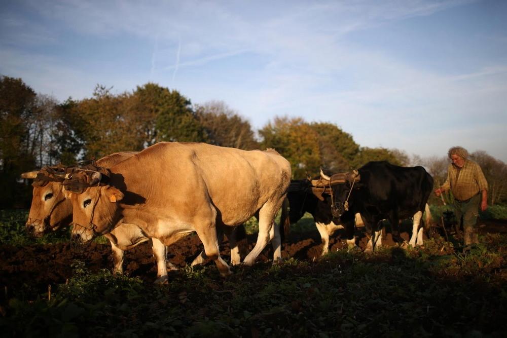 Французский фермер отказался от сельхозтехники и работает по старинке