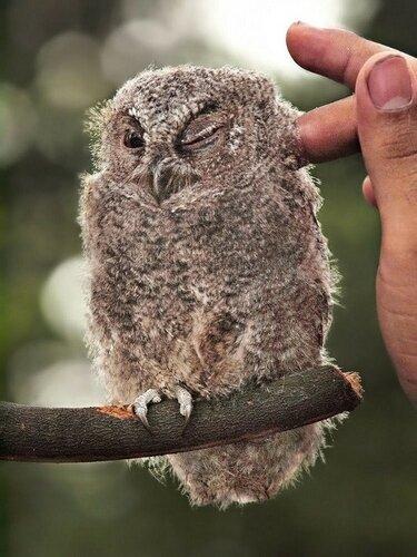 owls07.jpg