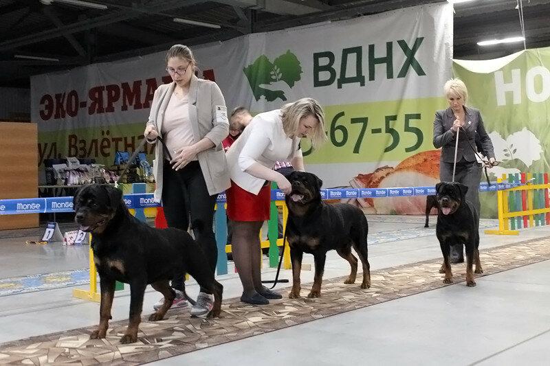 https://img-fotki.yandex.ru/get/987895/225487091.c6/0_17c55c_f4ef6a12_XL.jpg