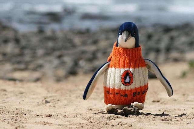 A Man Knits Sweaters to Protect Oil Covered Penguins