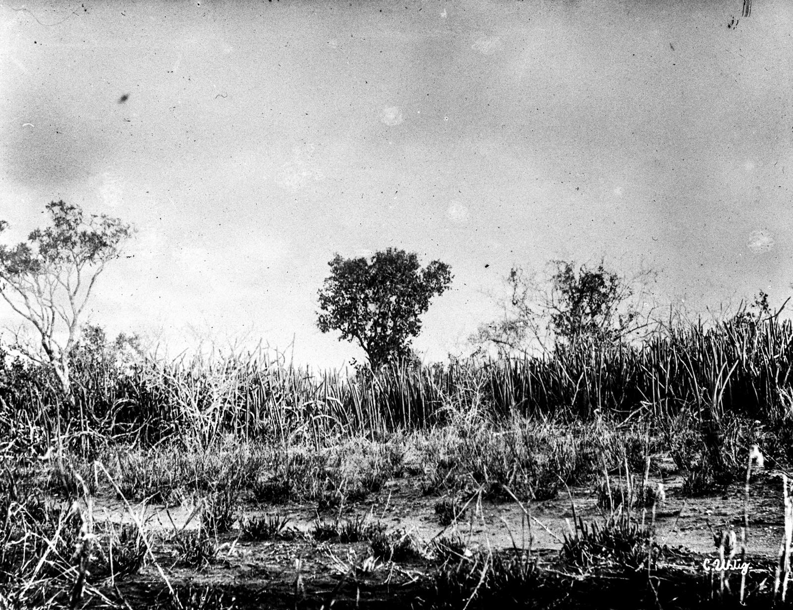 156. Ксерофильная растительность у подножия гор Паре