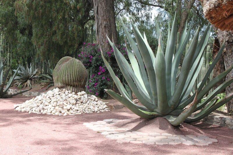 Мексика, Таско, голубая агава