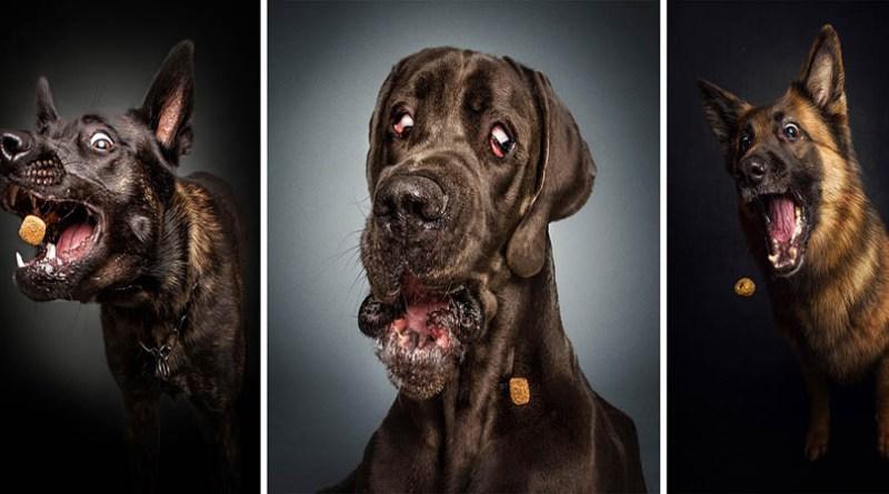 Забавные морды собак, ловящих корм