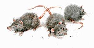 Мыши.jpg