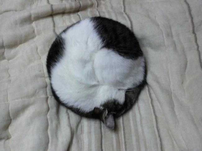 © imgur  Спать без задних ног— это вот так.