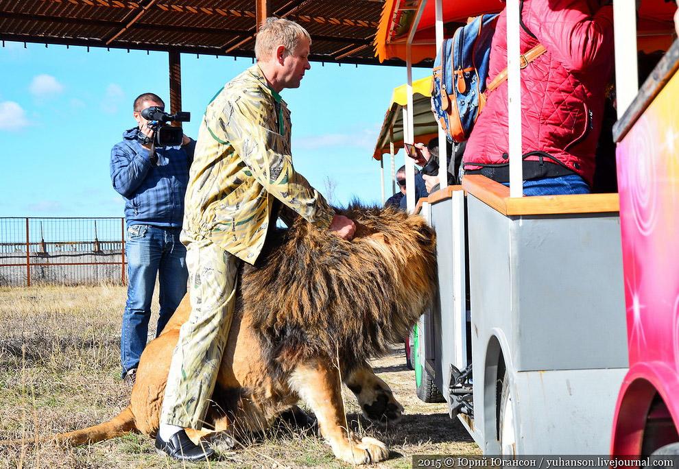 Олег сопровождал нас, сидя на царе зверей. Скажите, разве этот кадр не говорит об отношении