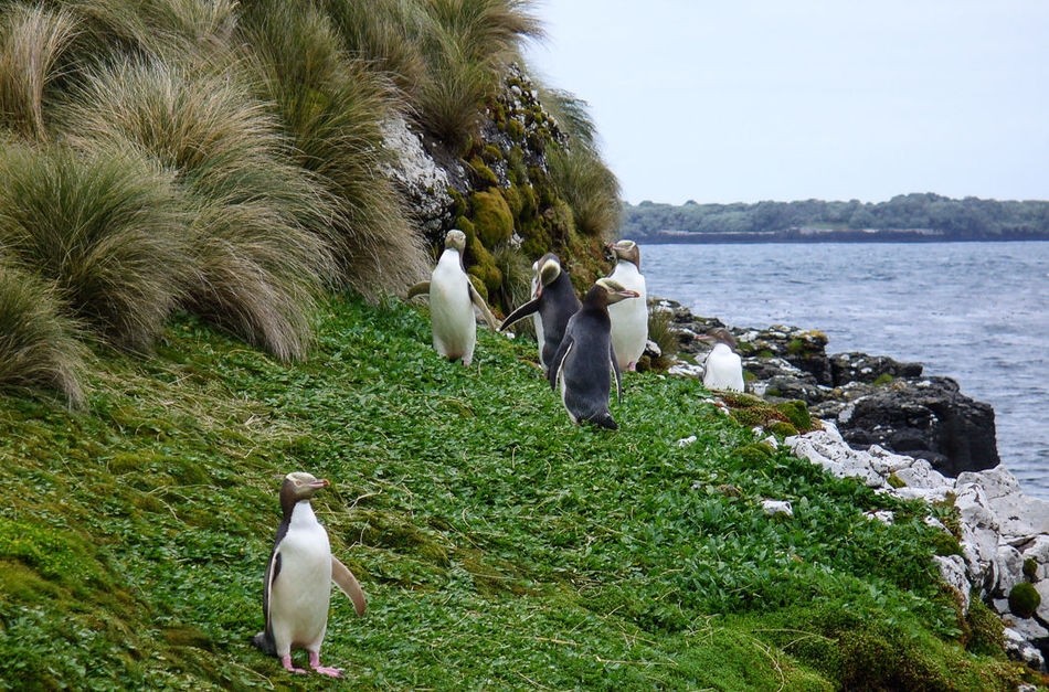 Известный как «последний дикий остров планеты», остров Тетепаре остается необитаемым с середины XIX