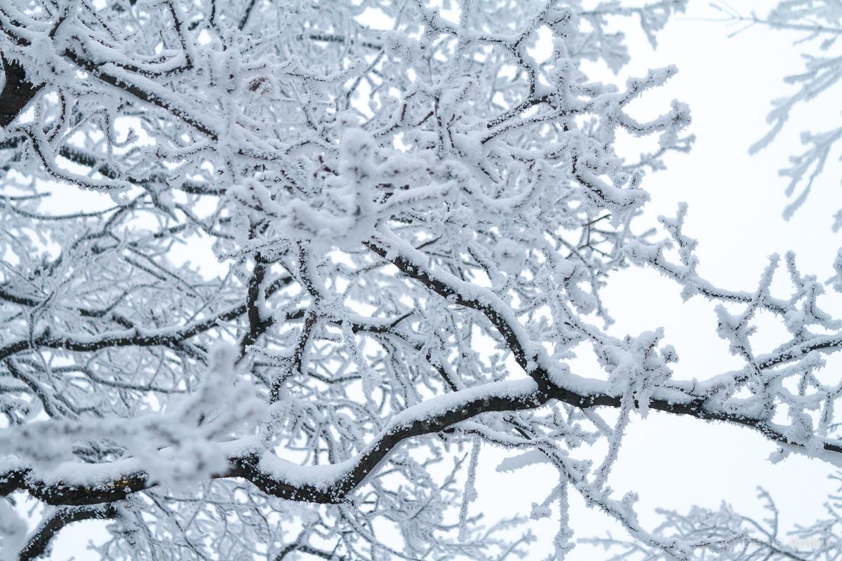 зима иней кумысная поляна саратов фото 2